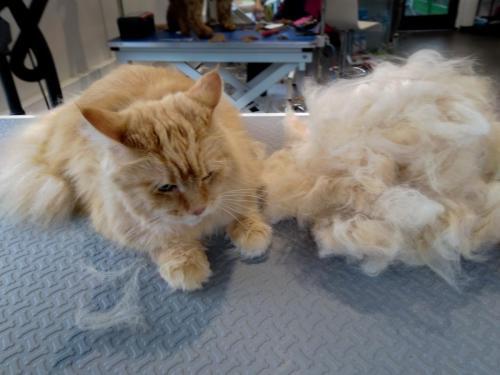 kat borstelen