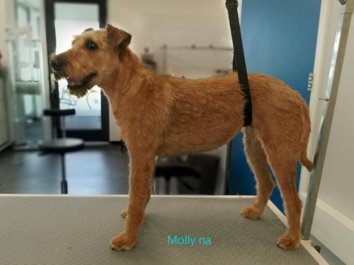 Molly na